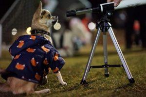 A dog looking through a telescope