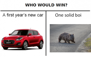 who would win? Car or wombat
